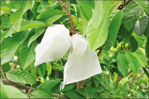 In túi vải không dệt bao bọc trái cây tại hà nội